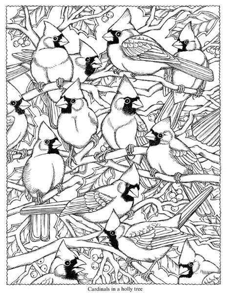 cardinals   ADVANCED COLORING BIRDS BUTTERFLIES   Pinterest