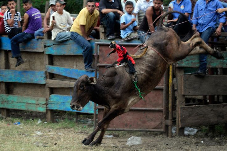 A monkey rides on the back of a bull during a bullfighting event at the festival of El Senor de Esquipulas at Tipitapa