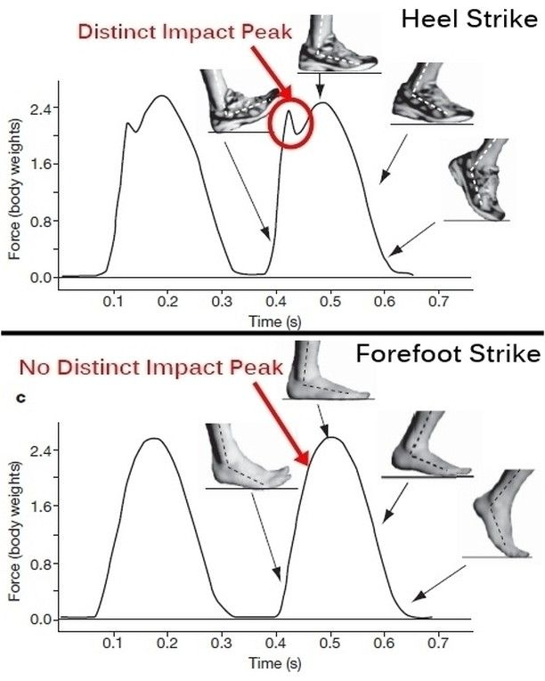 Impact transient the jamming impact of the heel strike causes a rapid rise  in the force (the initial graph spike) causing momentary loss of forward  motion ... d997c8b737e49