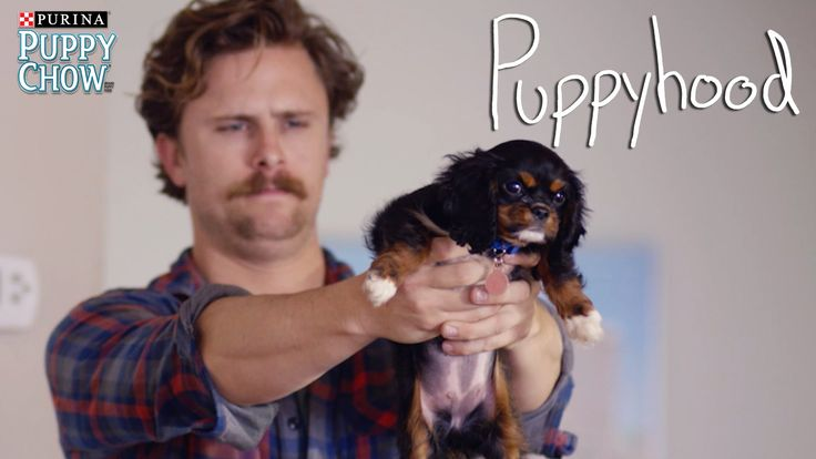 Puppyhood: Some Ground Rules. Visit puppyhood.com for the definitive ground rules on raising your new puppy.