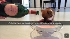 Celebrate your next promotion with dry food softener | 17 Times The Rich Kids Of Snapchat Ruined Everything