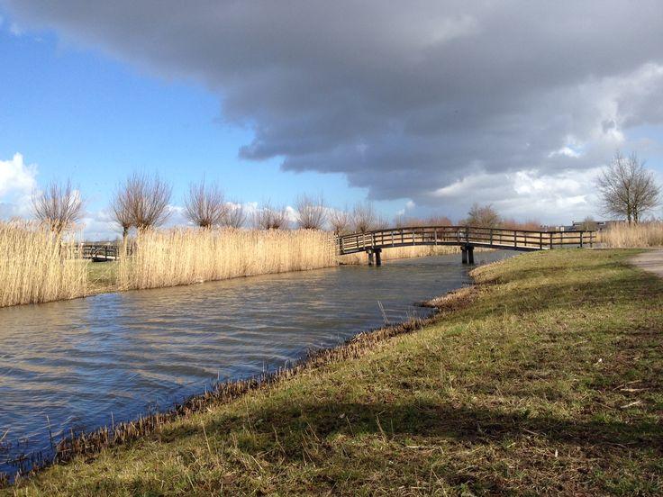 Schellerlanden Aan de rand van Zwolle. Foto Siep van der Veen