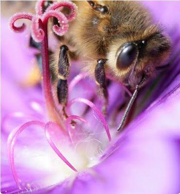BONITAS IMÁGENES DE ABEJAS - IMAGES OF BEES BEAUTIFUL