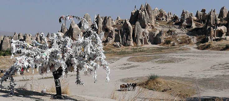 A wishing tree and horses, Cappadocia 5 weeks in Turkey [PICS] - Matador Network