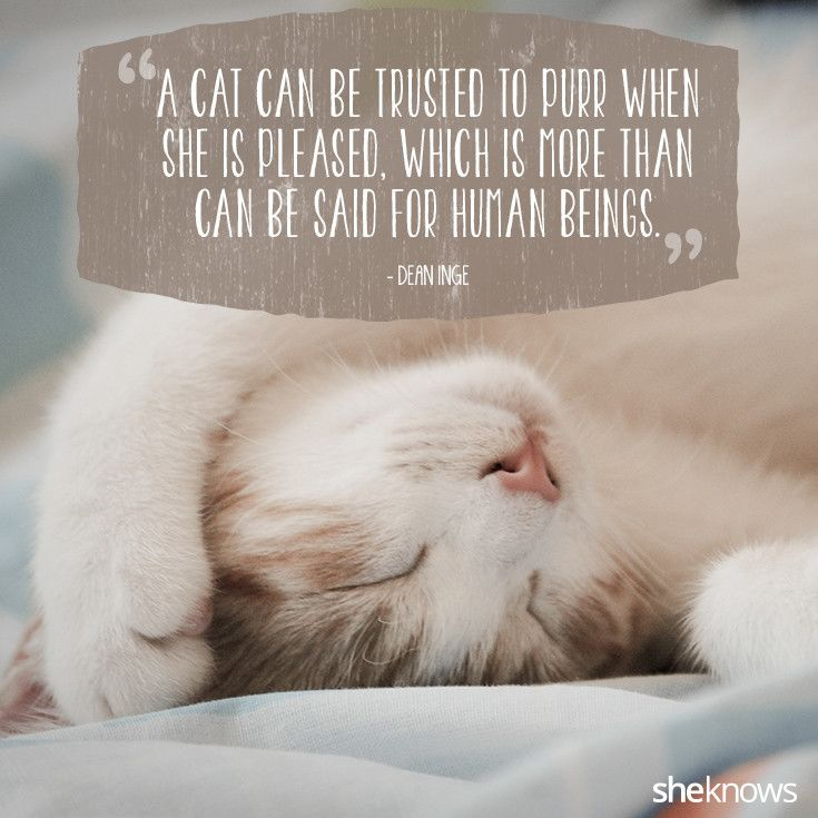 Funny Quotes About Cat Lovers : ... love for kitties purr quotes about cats all about cats cat quotes cat