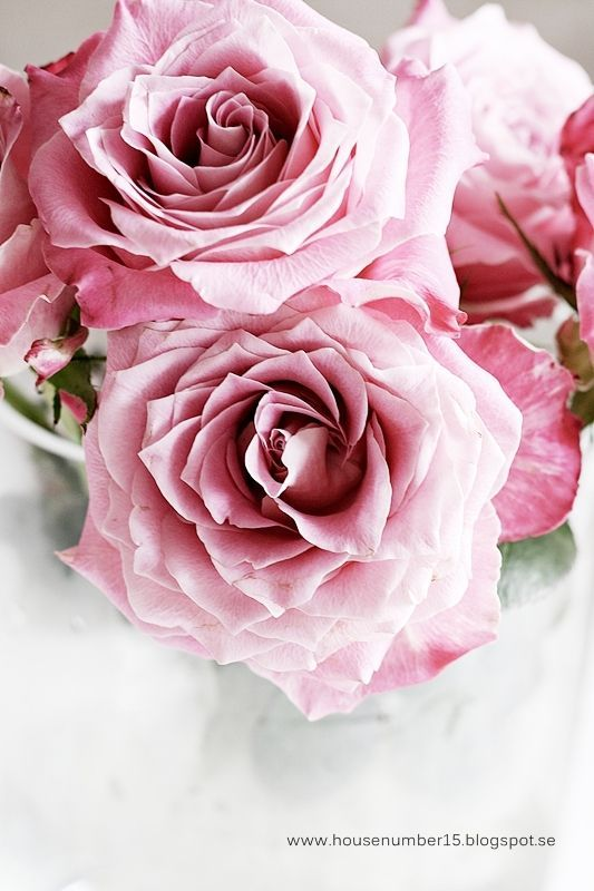 207 best ROSES AND LOVE images on Pinterest | Beautiful flowers ...