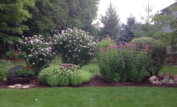 Summer 2014 Rose of Sharon bushes, Joe Pye Weed on right, sedum around bird bath