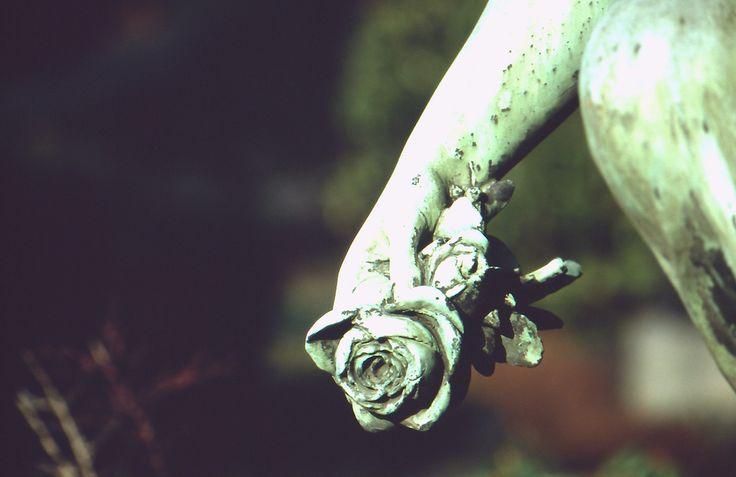 https://flic.kr/p/bxXWNX   Die letzte Rose   Kamera: Canon AE-1 Program Film: DM Paradies 100 DIA  Canon FD 70-210mm f 4.0  Meine entwickelten Dias sind endlich da ;)