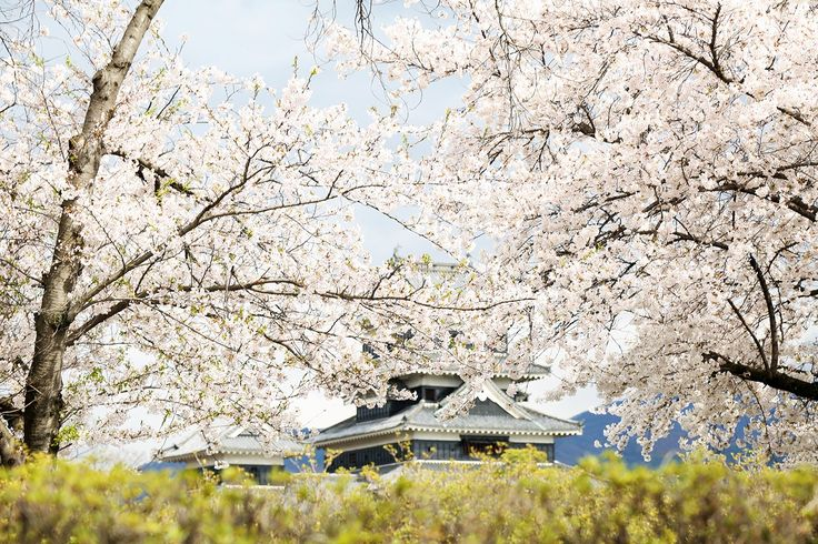 Japan: The Birth of Spring on Behance