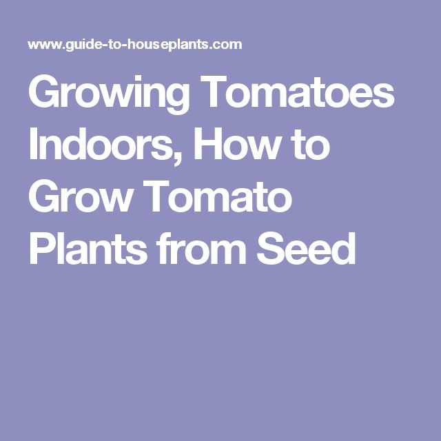 Growing Tomatoes Indoors, How to Grow Tomato Plants from Seed