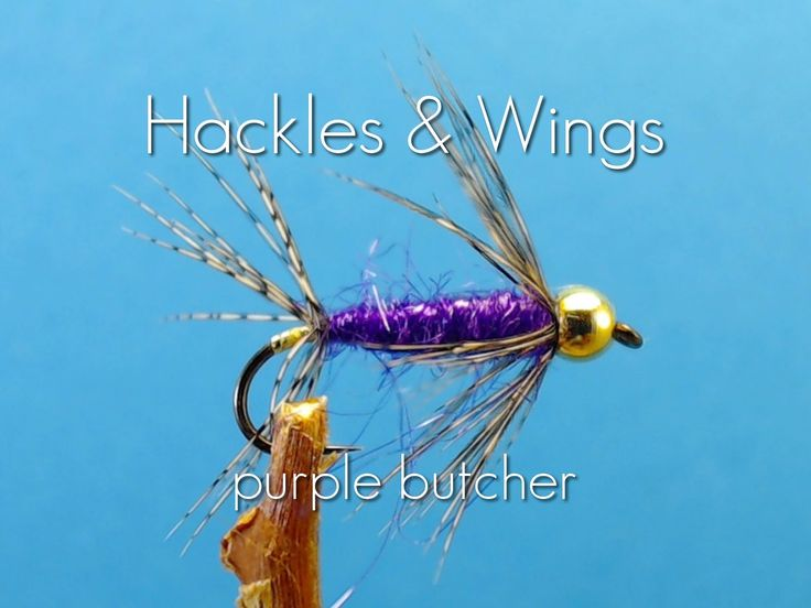 Hackles & Wings Fly Tying. Today we are going to tie a Purple Butcher. Materials : Thread: Uni 8/0 Tan Hook: 3XL Nymph Hook size 12 3.3mm Gold Bead Body: Pur...
