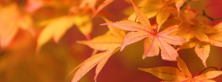 Orange Fall Leaves Facebook Cover - Beautiful Fall Leaves Pictures Preview