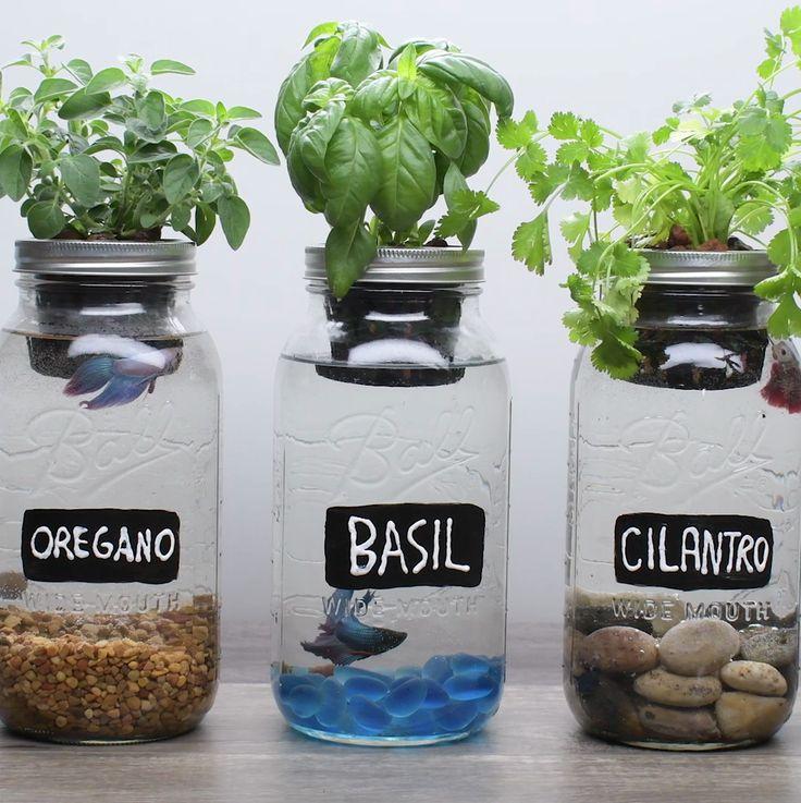 Best 25 Mason Jar Planter Ideas On Pinterest Mason Jar