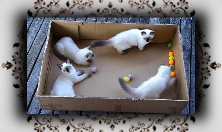 DIY  Ball Rutsche für Katzen & Hunde   Ball Slide Pool for Cats