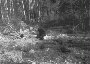 "Ray Wallace:  ""Here is a picture of a female Big Foot... I bought it, the negative, from a photographer who was up near Mt. St. Helens in March taking pictures when he saw this giant sized female sitting on a log asleep as she was so heavy with a baby inside of her that she could not move very fast, he said she would have been easy to capture while sleeping on this log on an old abandoned loading site where they used to load out logs several years ago."" -bigfootencounters.com"