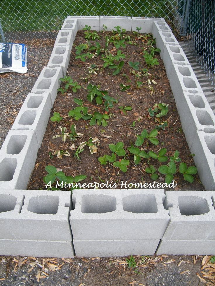 Best 20 Raised garden beds cinder blocks ideas on Pinterest Bed
