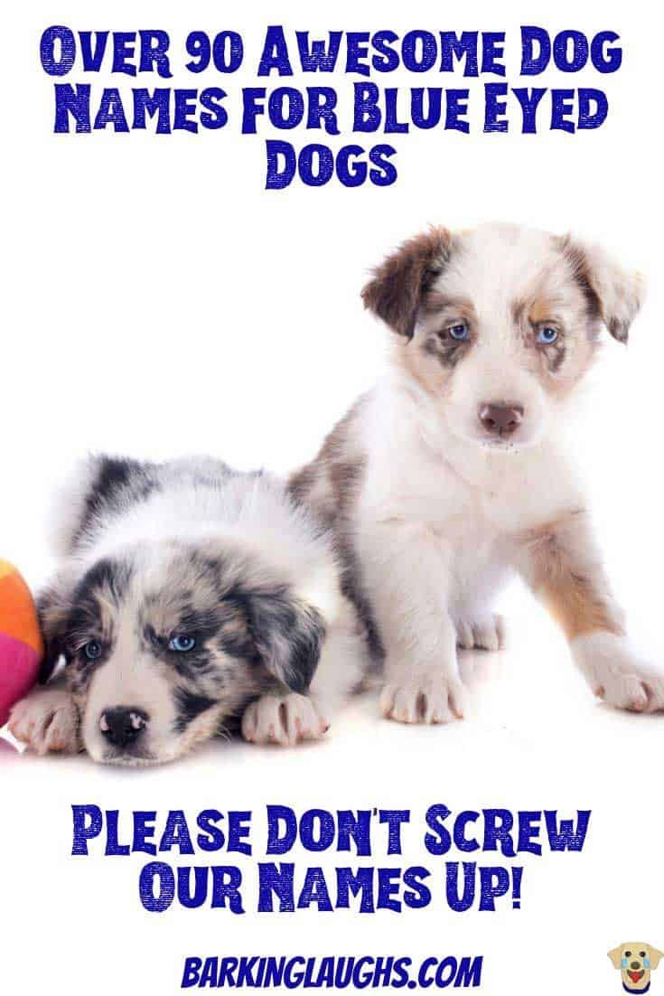 Over 90 Of The Most Hypnotic Blue Eyed Dog Names Blue Eyed Dog Blue Eyed Dog Names Dog Names