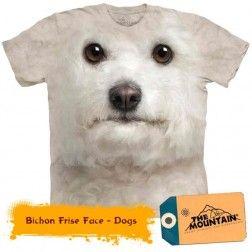Bichon Frise Face - Dogs