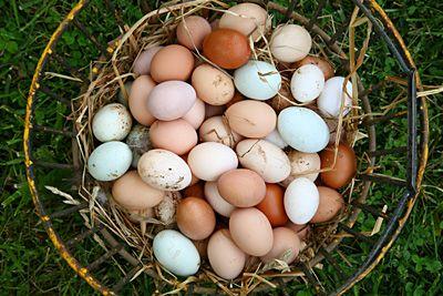 Egg Econonomics: Local chef, Andrea Reusing Discusses the benefits of old-fashioned farm fresh eggs in Gourmet Magazine.