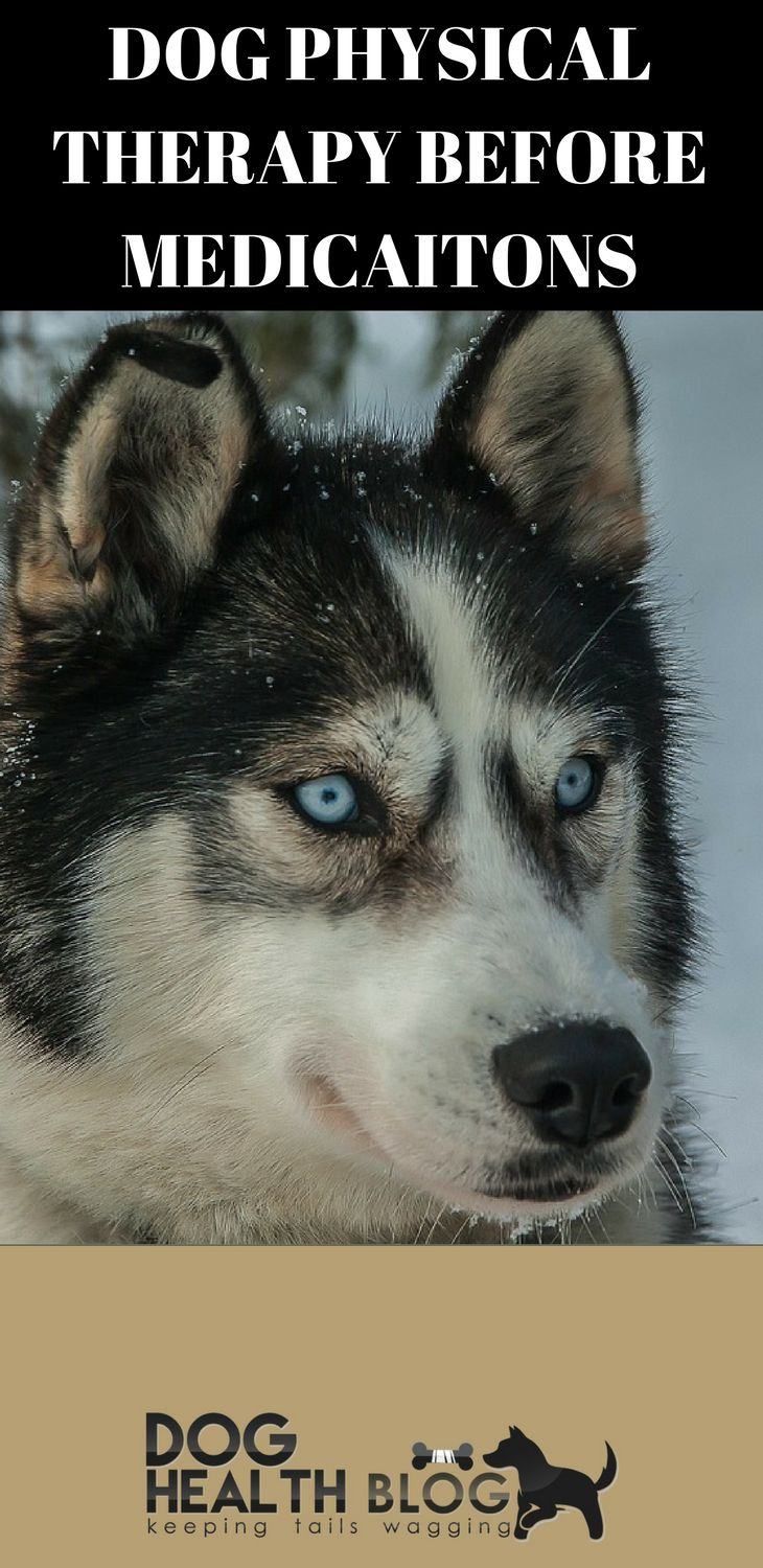 Best 25 husky weight ideas on pinterest alaskan malamute dog physical therapy can reduce painful ailments without the deleterious effects of medications free dog nvjuhfo Gallery