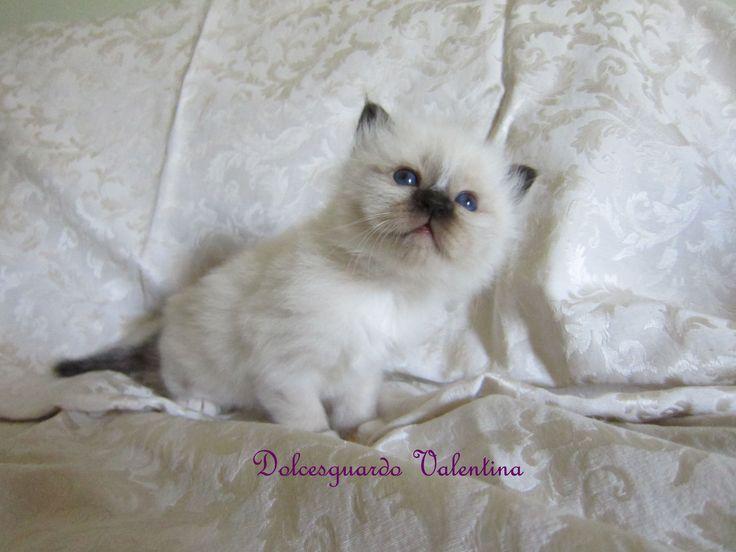 Dolcesguardo Valentina 1 mese