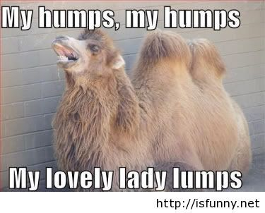 Funny hump day picture meme isfunny.net