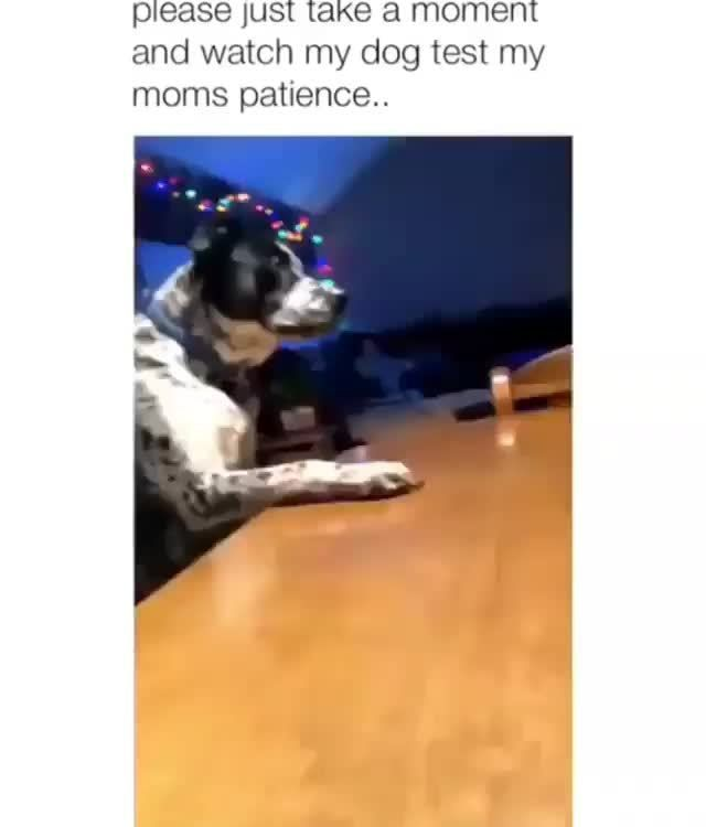 Pin On Funny Animals