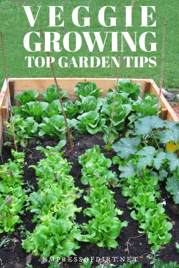20 Quick Growing Veggies To Grow In 4 6 Weeks With Images