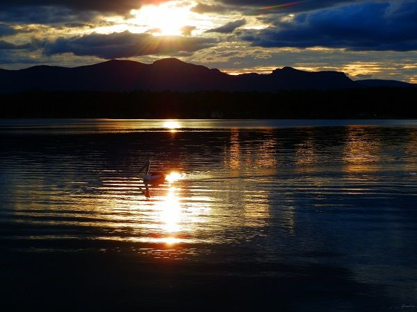 Blue Sunset with Pelican at Lake Moogerah, Australia's Scenic Rim