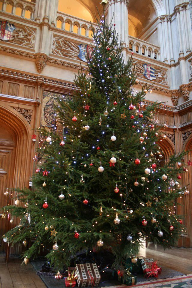 Christmas Tree at Highclere Castle (the star of Downton Abbey)...