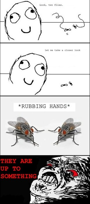 meme comic the flies are up to something- Lol Image