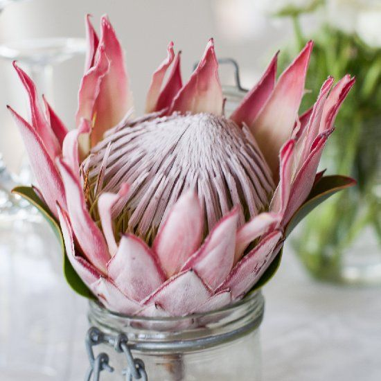 Stunning Protea flowers were used as showstopping decor elements. {Linda Fourie Photography}