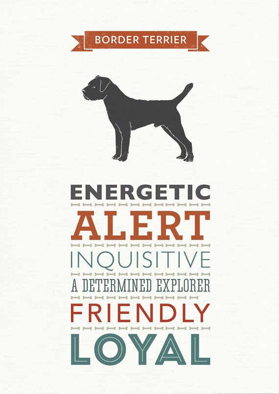 Border Terrier Dog Breed Traits Print Border by WellBredDesign