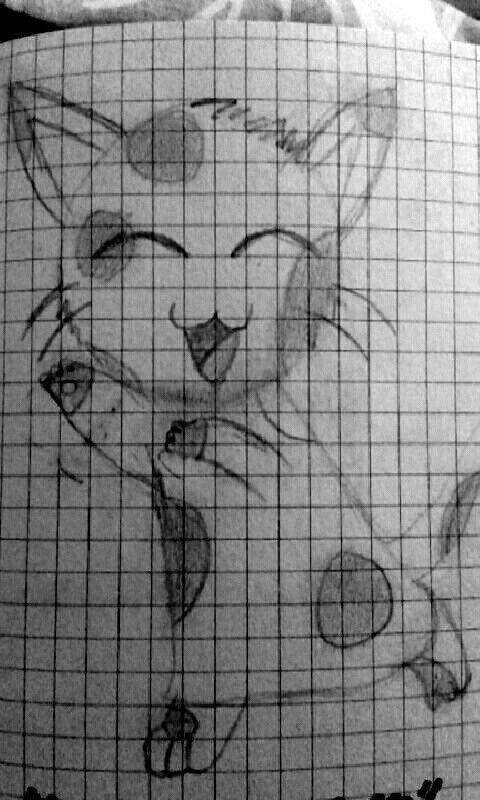 Koteł Cat