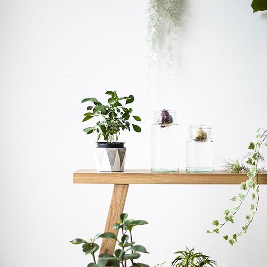 【新商品】楽しく育てる球根ライフ♪フラワーベースとしても使える、理想の花瓶を見つけました! – 北欧、暮らしの道具店