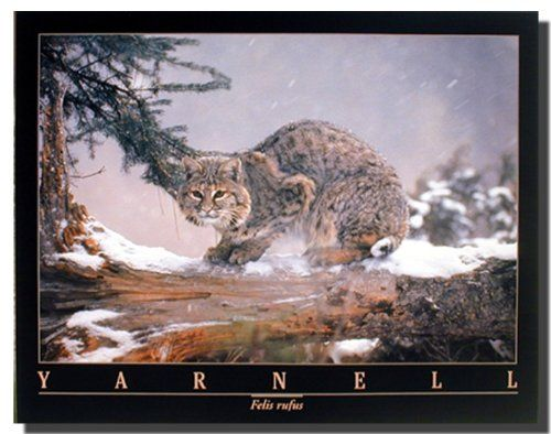 Awesome! Brighten up any room with this bobcat in snow cat wild animal art print poster. It will be a great addition for your home decor especially for your child's room. It offers innovative and unique decorative pattern. Discover the uniqueness of this poster and Order today for its durable quality and excellent color accuracy.