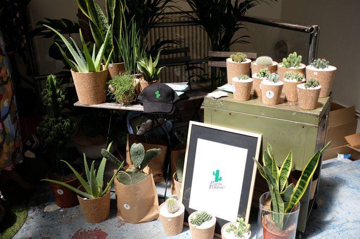 Végétalisation, aloe vera, cactus, figuier de barbarie -  les others