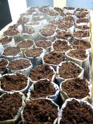 :: fast. easy. tutorial. newspaper seedling pots: Fantastic Ideas, Little Houses, Newspaper Pots, Seedl Pots Last, Growing Seedl, Neat Ideas, Make Paper, Newspaper Seedl Pots, Great Ideas
