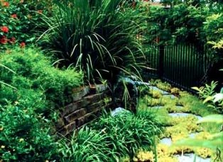 45 Best Images About Tropical Landscaping On Pinterest Landscaping Tropical Landscaping And