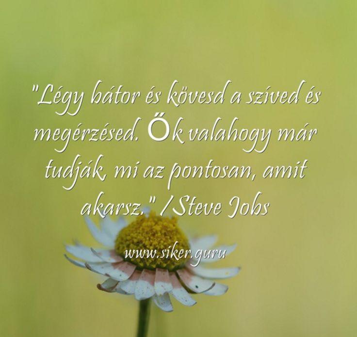#siker #idézet Anita Andrade siker guru by Sikerkalaúz