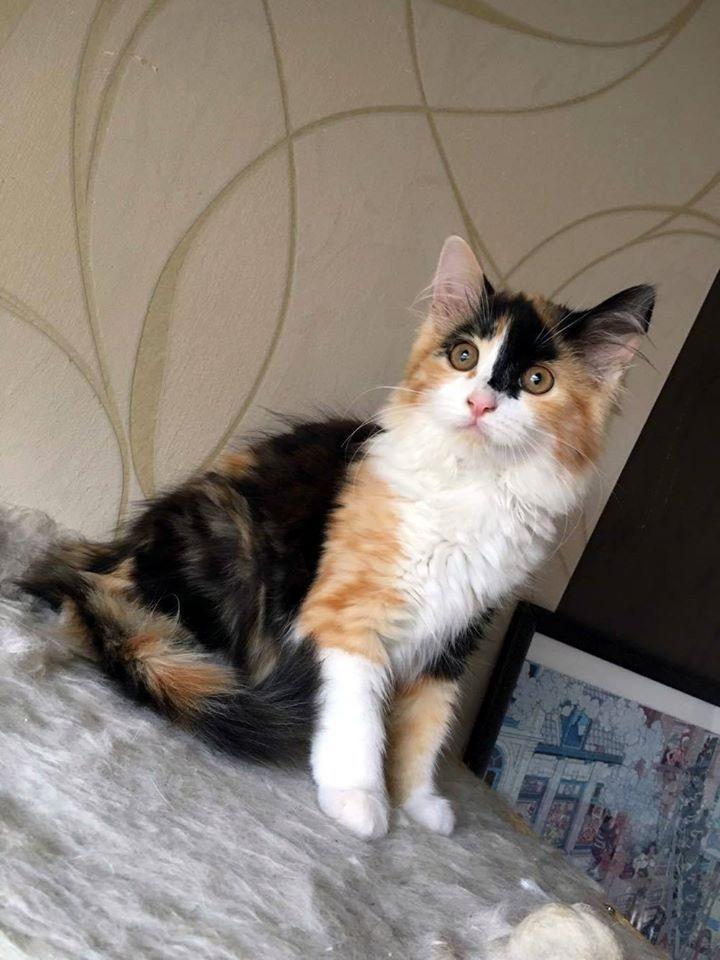 cat ♥                                                                                                                                                                                 More