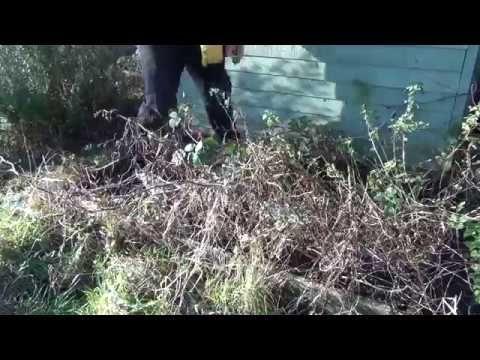 Slow TV Gardening: Weeding neglected flower bed