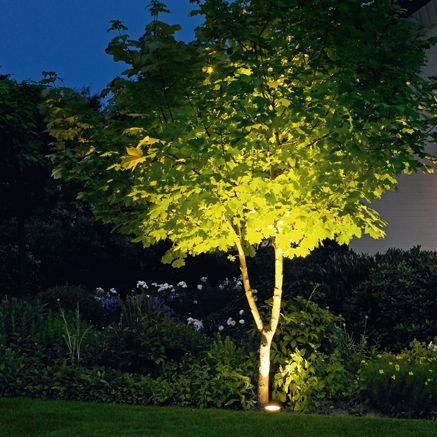#Inspiratie #Tuinverlichting Mooi om de bomen te verlichten #12volt
