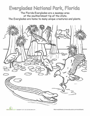 Everglades National Park Coloring