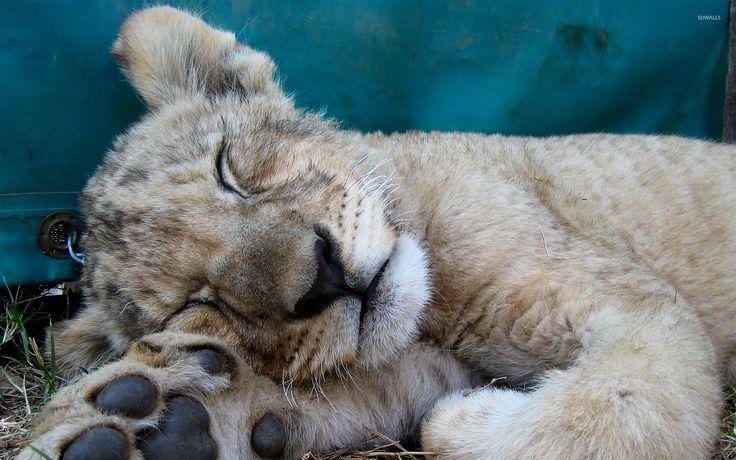 Best 25+ Cubs Wallpaper Ideas On Pinterest