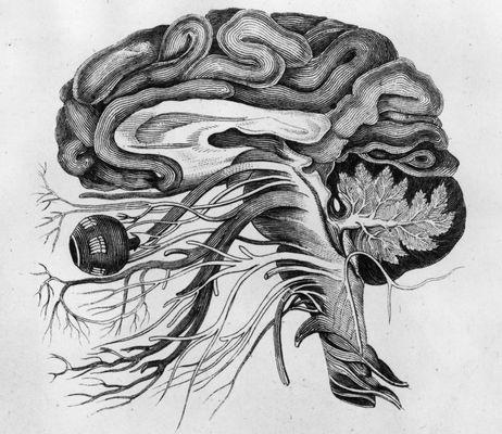 Neurology is beautiful: Anatomy Illustrations, Art Inspiration, Neural Events, Brain Anatomy, The Brain, Beautiful Language, Anatomical Drawings Brain, Neural Signature, Drawings Inspiration