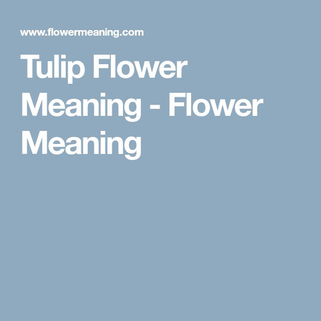 Tulip Flower Meaning - Flower Meaning