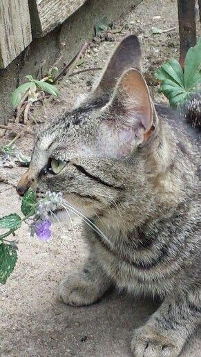 Ziva en haar kattekruid