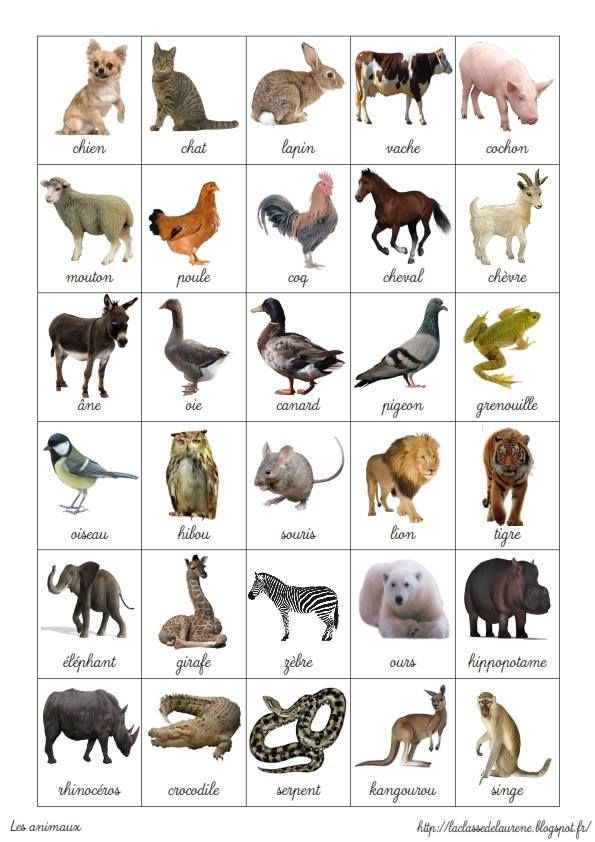 Gut gemocht 188 best FLE: Animaux images on Pinterest | French class, French  GR36