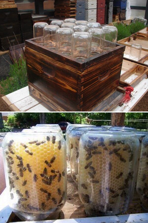 Watch the bees work and make the honey comb by using Mason jars on a honey bee hive: this is awesome!! 11 Easy DIY Projects for Beautiful Garden | Diy Crafts You & Home Design